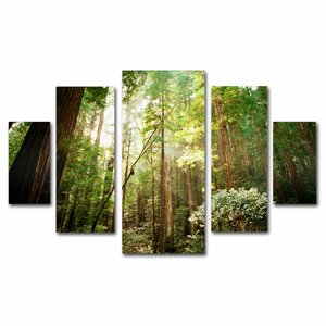 'Muir Woods' by Ariane Moshayed 5 Piece Photographic Print on Wrapped Canvas Set by Trademark Fine Art