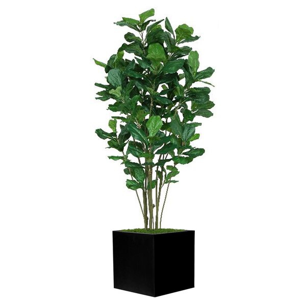 Ficus Tree in Planter by Darby Home Co