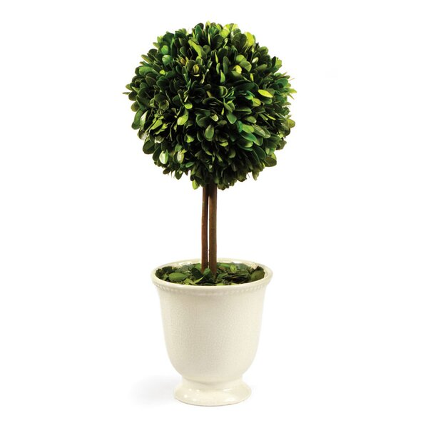 Boxwood Topiary in Pot by Ophelia & Co.