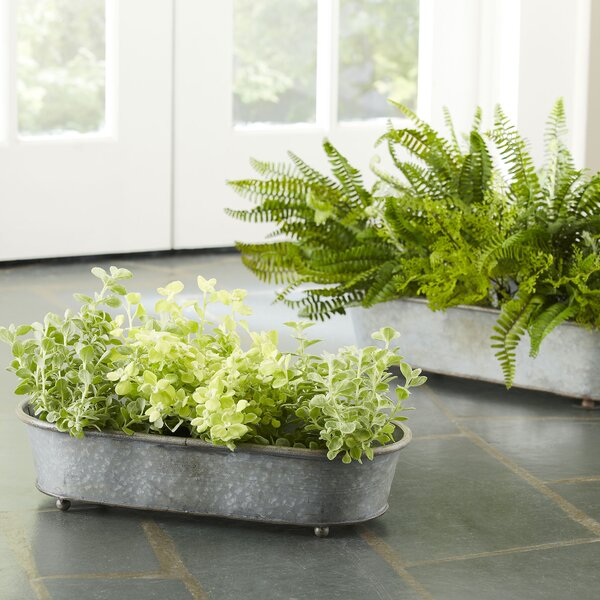 Galvanized Steel Pot Planter Set by Birch Lane™