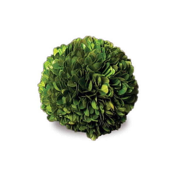 Preserved Greens BoXwood Ball (Set of 4) by Napa Home and Garden