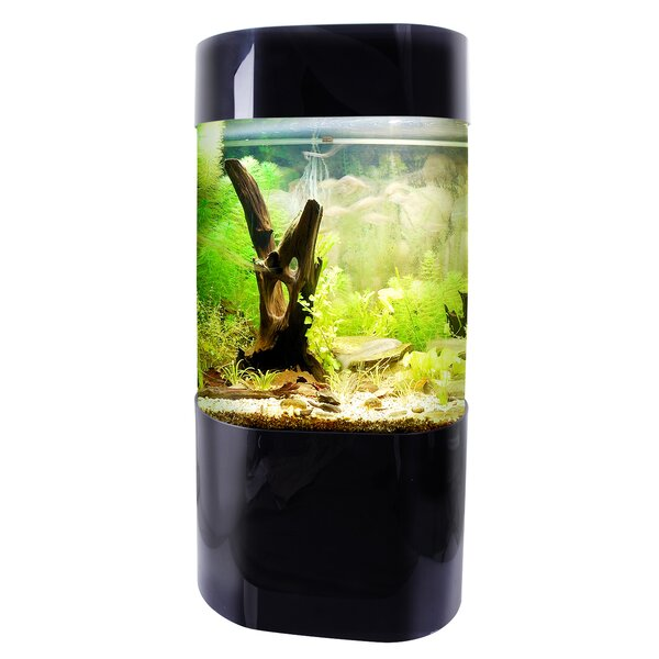 Nolen 35 Gallon Aquarium Tank by Tucker Murphy Pet