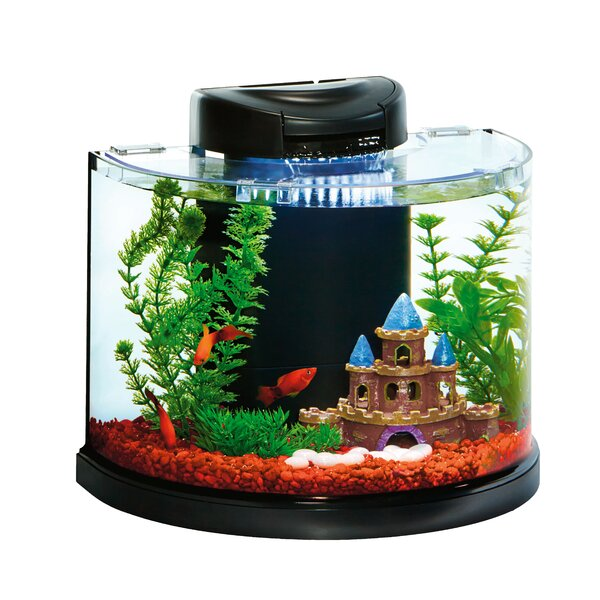 3 Gallon AquaDuo Semi Circle Glass Aquarium Kit by Elive