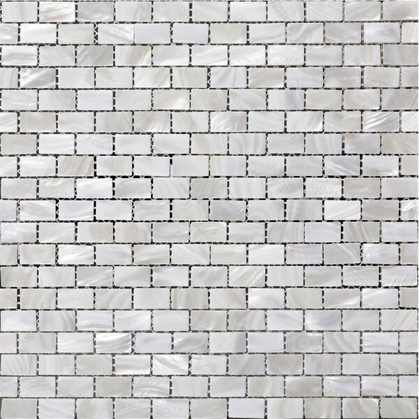 Mesh Mounted 0.5 x 1 Authentic Polished Seashell Mosaic Tile in White by Matrix-Z