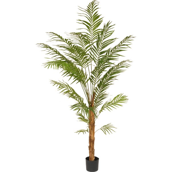 Areca Palm Tree in Pot by National Tree Co.
