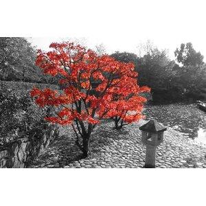 Autumn's Maple Photographic Print by Prestige Art Studios