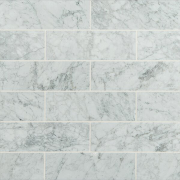 4 x 12 Honed Marble Tile in Arabescato Carrara by MSI