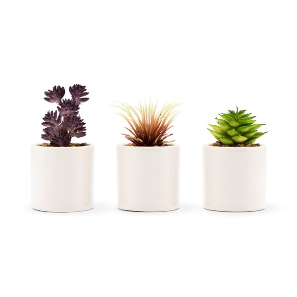 Small Faux Desktop Succulent Plant in Pot (Set of 6) by Bungalow Rose