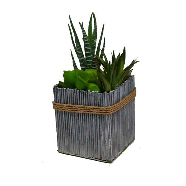 Plant in Planter (Set of 6) by GT DIRECT CORP