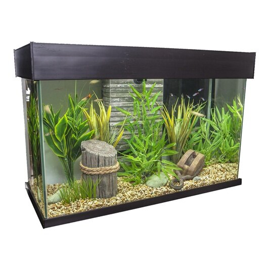 Ainsley 25 Gallon Accent Aquarium by Archie & Oscar