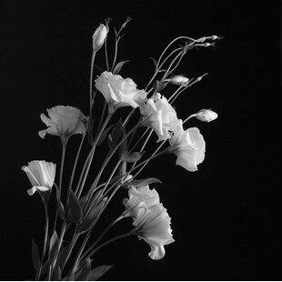 Black and white flower art wayfair white flowers gray photographic print mightylinksfo