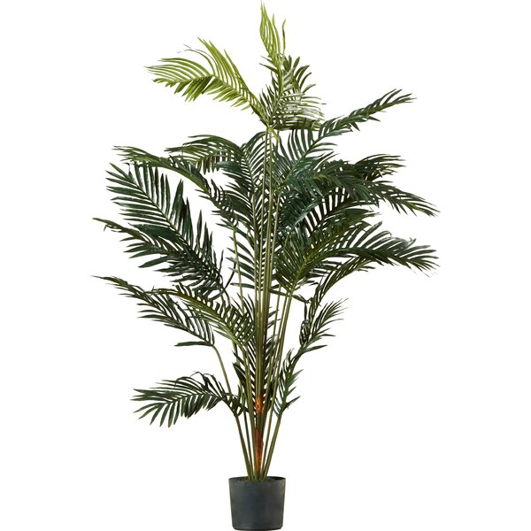 Paradise Palm Tree Floor Plant in Pot by Beachcrest Home