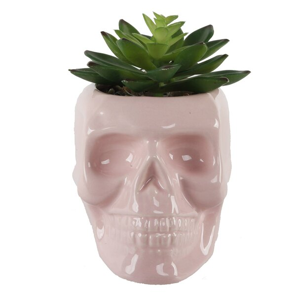 Desktop Succulent Plant in Ceramic Sugar Skull Pot