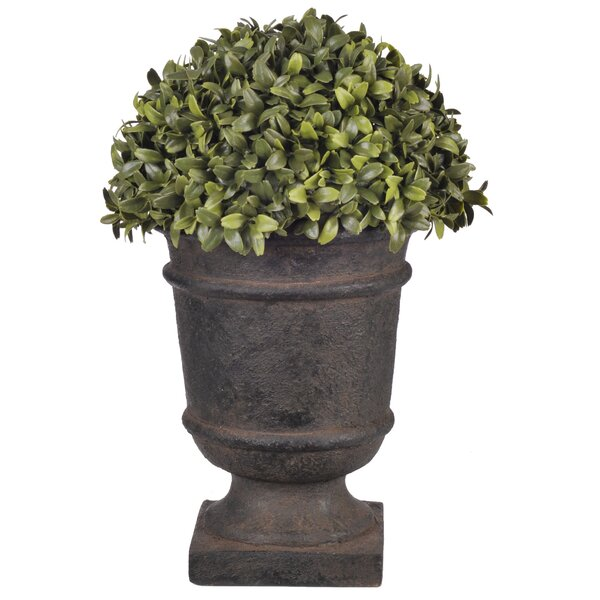 Artificial Half Ball Desk Top Plant in Urn by Charlton Home
