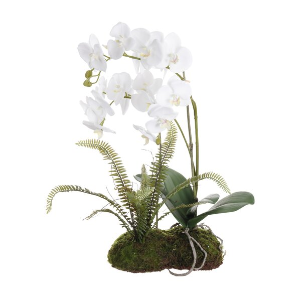 Drop Orchid Floral Arrangement in Plant (Set of 2) by Ophelia & Co.