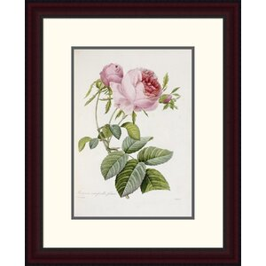 'Rose' by Pierre Joseph Redoute Framed Painting Print by Global Gallery