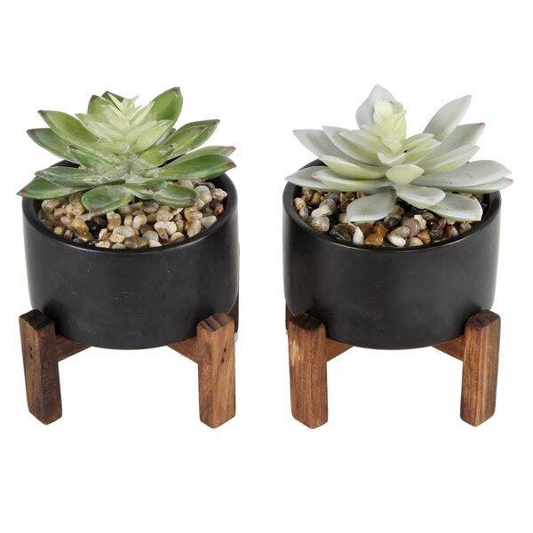 2 Piece Succulent Desktop Plant in Pot Set (Set of