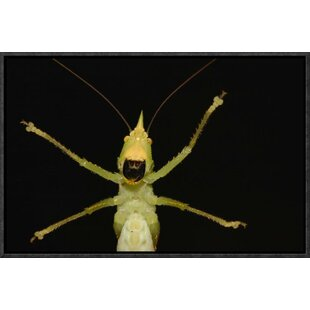 'Katydid Close-Up of Underside' Framed Photographic Print on Canvas by East Urban Home