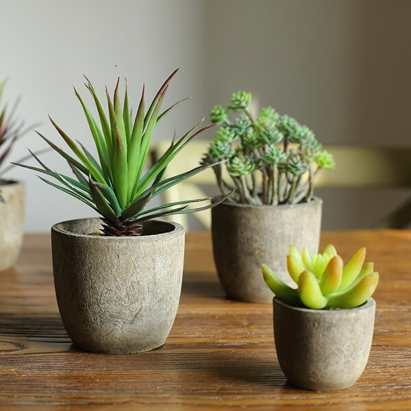 5 Piece Rustic Artificial Succulent Randomly Picked Desktop Plant in Pot Set by Ivy Bronx
