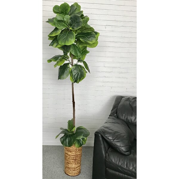 mistana fiddle leaf fig palm tree in basket reviews wayfair