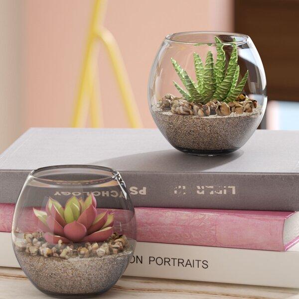 2 Piece Succulent Plant in Pot Set by Willa Arlo Interiors