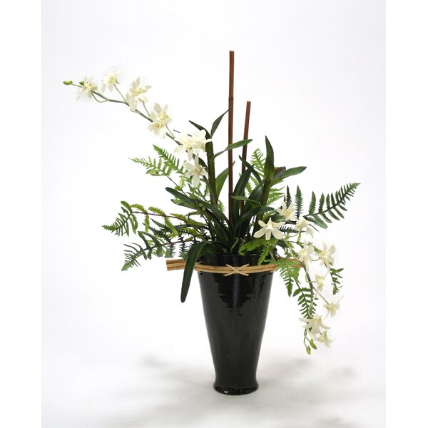 Black and White Orchid Garden in Fuji Vase by Distinctive Designs