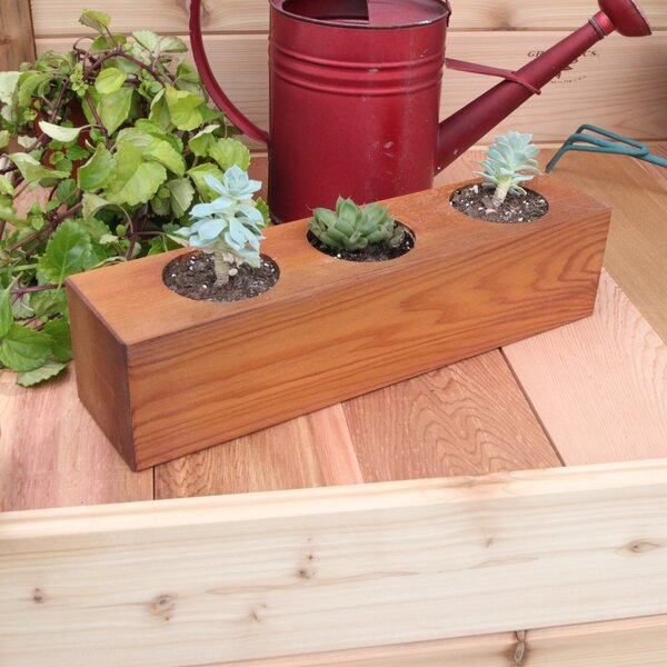 Succulent Cedar Pot Planter by Gronomics