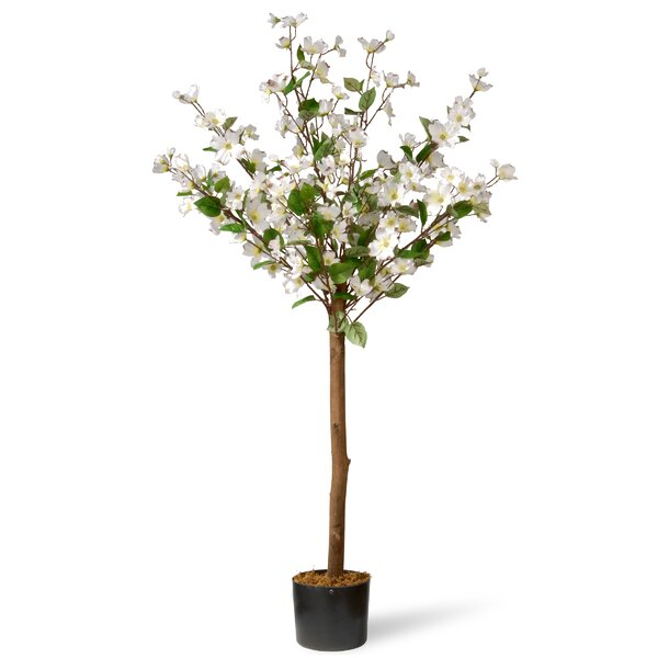 Dogwood Floor Flowering Tree in Pot by August Grove