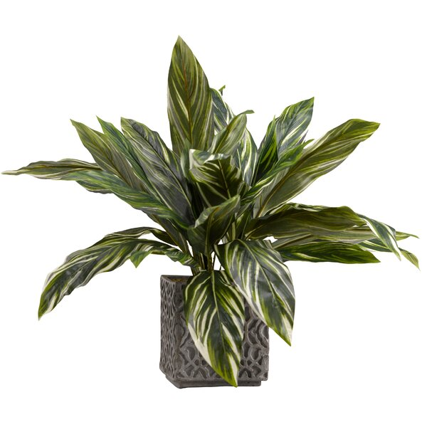 Dracaena Plant in Planter by Charlton Home