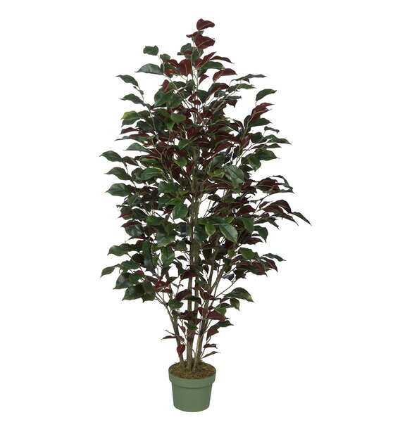 Ficus Tree in Pot by House of Silk Flowers Inc.