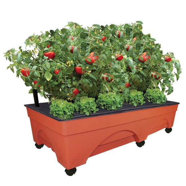 Big City Picker Self-Watering Plastic Planter box by EMSCO Group