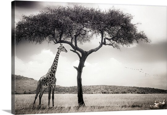 Under the African Sun by Piet Flour Photographic Print on Canvas by Canvas On Demand