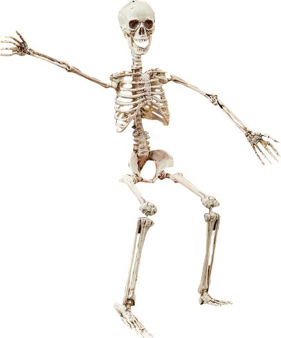 Posable Skeleton Figurine by The Holiday Aisle
