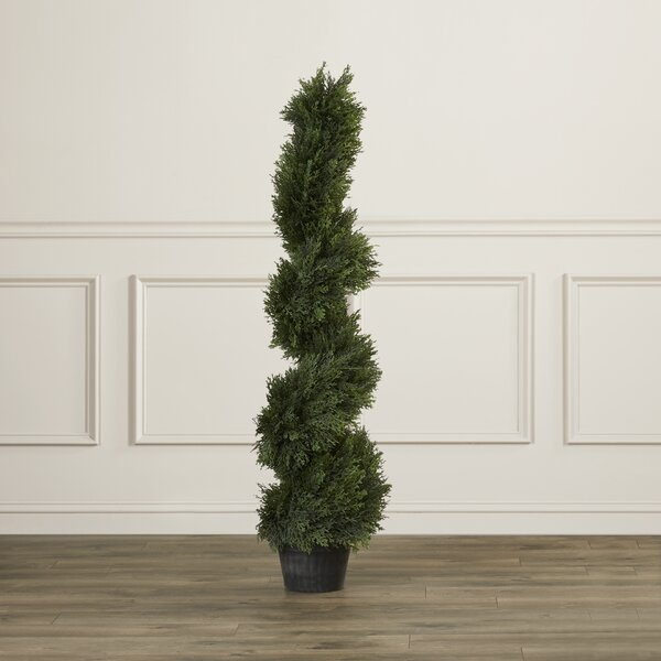 Brown Cedar Spiral Topiary in Pot by Darby Home Co