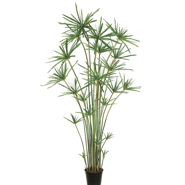Cypress Grass Tree in Pot by Bay Isle Home