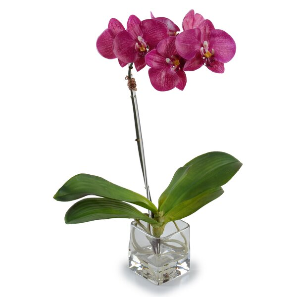 Small Faux Phalaenopsis Orchid by New Growth Designs