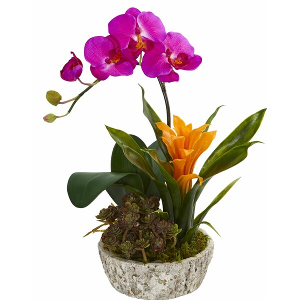 Artificial Bromeliad Succulent Orchid Floral Arrangement in Planter by Bay Isle Home