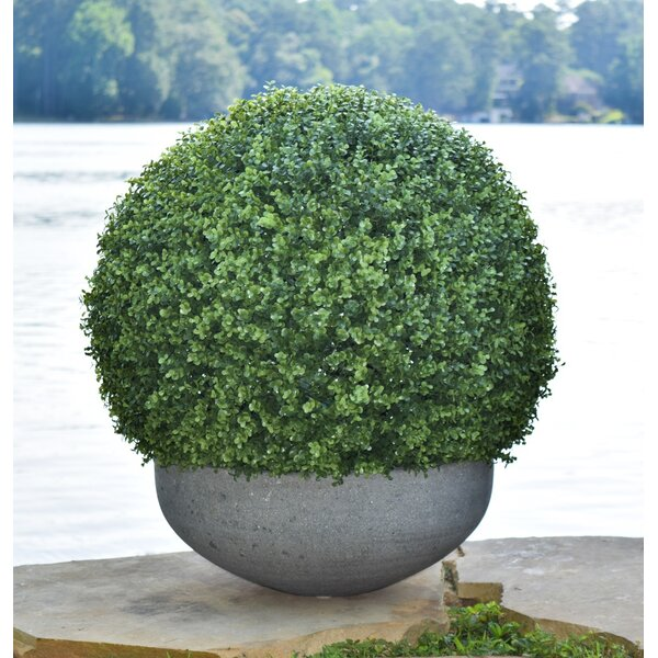Floor Boxwood Topiary in Planter by Canora Grey