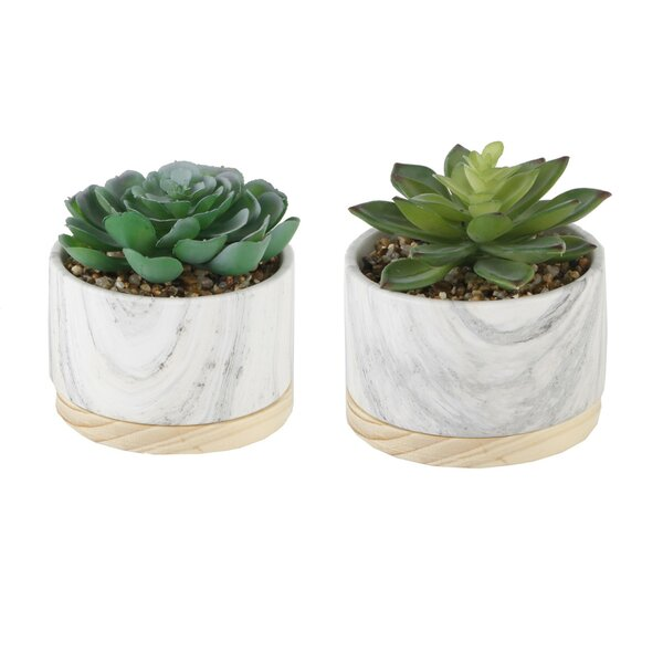 2 Piece Marbel/ Wood Base Desktop Succulent Plant Set by Ebern Designs