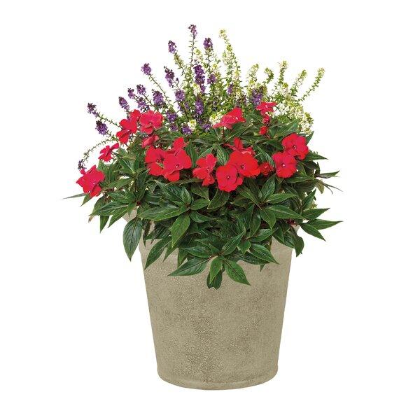 Langston Resin Pot Planter (Set of 2) by Suncast