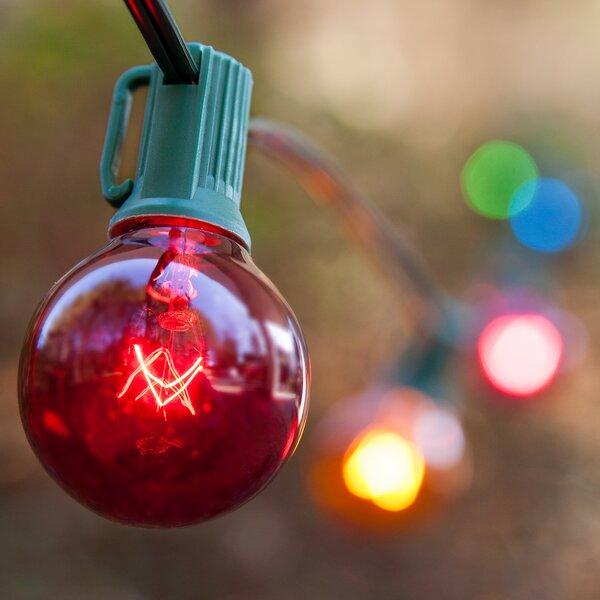 Steady 25 Light String Light by Wintergreen Lighting