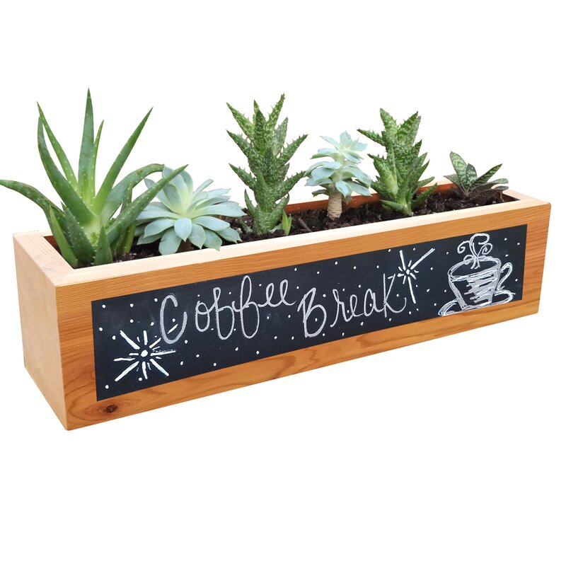 new planter savings shop on cumberland lead square international lite campania