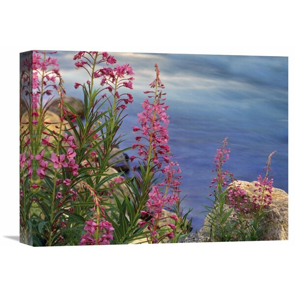 Nature Photographs Fireweed Against Flowing Stream, North America by Tim Fitzharris Photographic Print on Canvas by Global Gallery