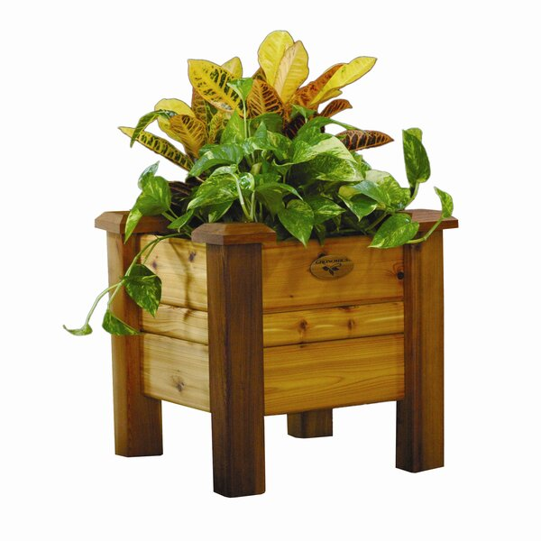 Cedar Planter Box by Gronomics