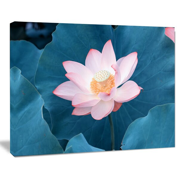 Blooming Pink Lotus Flower Photographic Print on Wrapped Canvas by Design Art