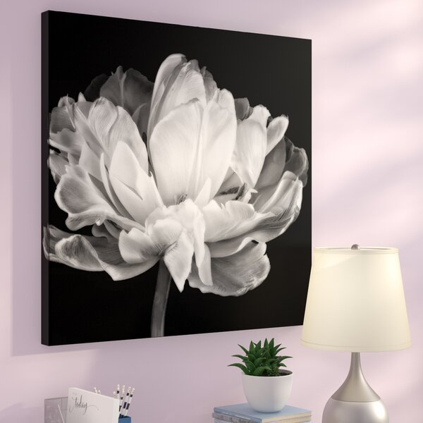 Tulipa Double Black & White by Cora Niele Photo Graphic Print on Canvas in Black by Zipcode Design