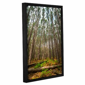 Grow Till Tall Framed Photographic Print by Loon Peak