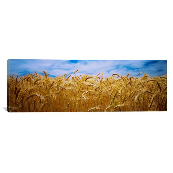 Panoramic Wheat Crop Growing in a Field, Palouse Country, Washington State Photographic Print on Wrapped Canvas by iCanvas