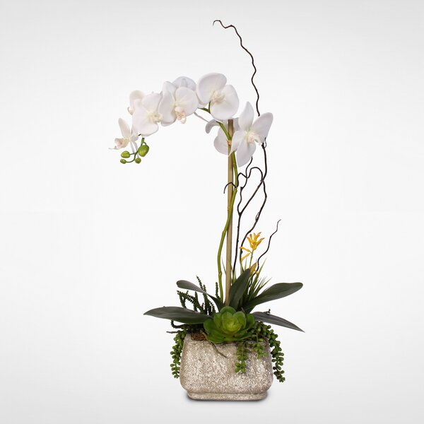 Phalaenopsis Silk Orchid with Succulents Floral Arrangement in Pot by Rosecliff Heights