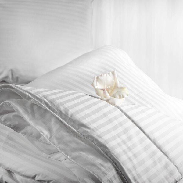 Ayaana Winter Comforter Collection